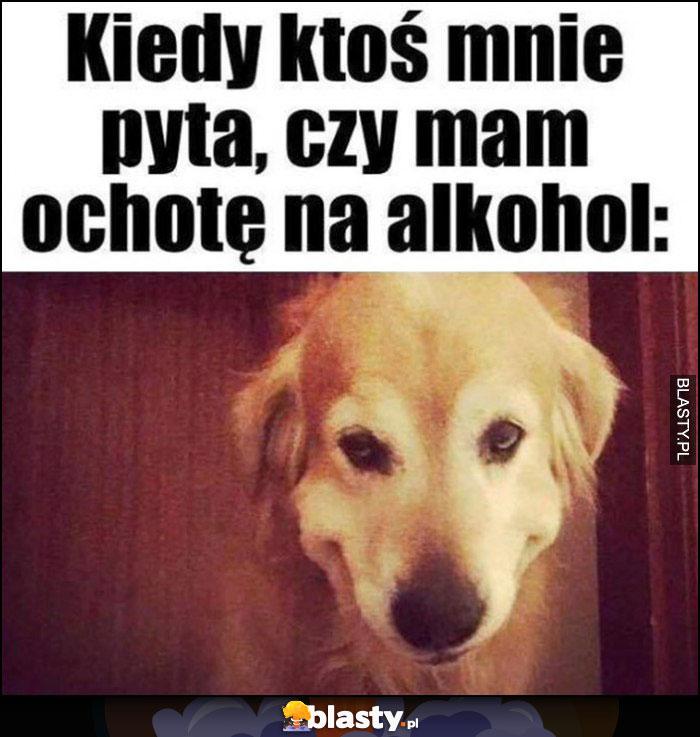 Kiedy ktoś mnie pyta czy mam ochotę na alkohol pies dziwna mina