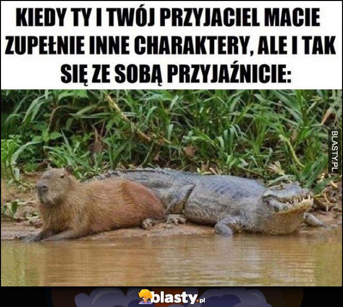 Kiedy Ty i Twój przyjaciel macie zupełnie inne charaktery, ale i tak się ze sobą przyjaźnicie aligator bóbr