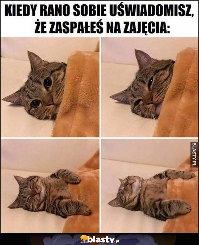Kot kiedy rano sobie uświadomisz, że zaspałeś na zajęcia