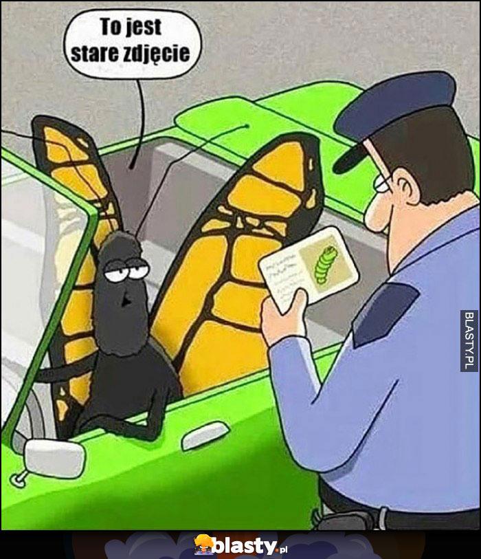 Motyl larwa kontrola policji to jest stare zdjęcie