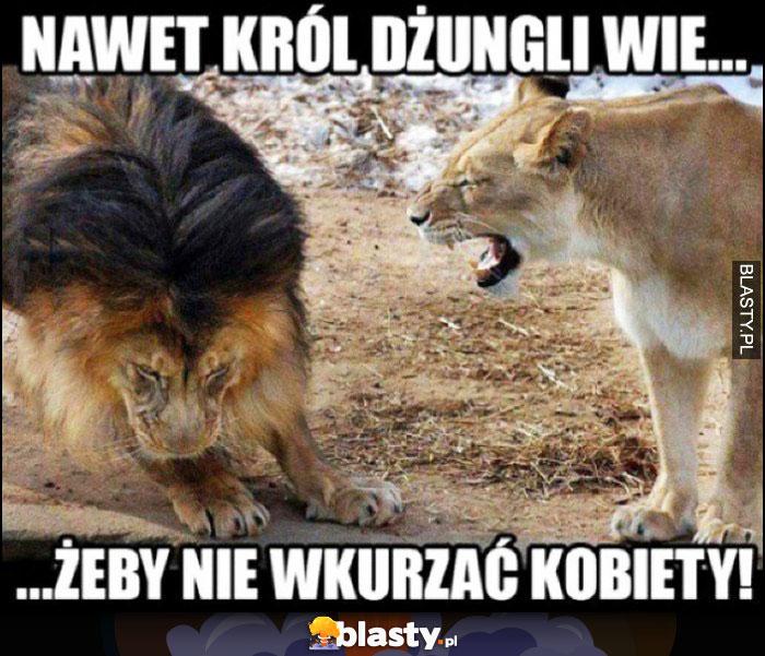 Nawet lew król dżungli wie, żeby nie wkurzać kobiety