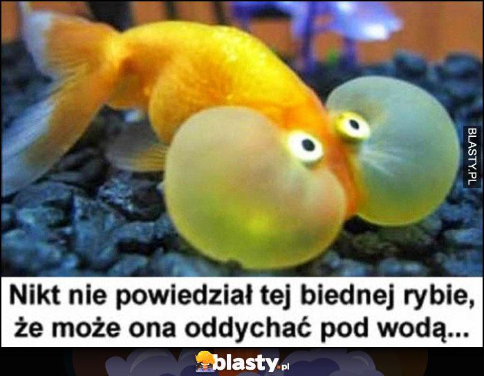 Nikt nie powiedział tej biednej rybie, że może ona oddychać pod wodą