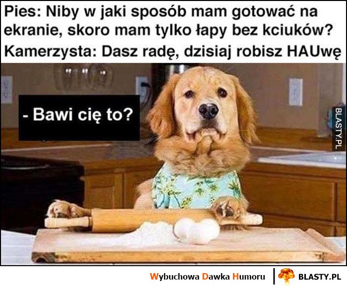 Pies: jak mam gotować jak nie mam kciuków, kamerzysta: dasz radę, dzisiaj robisz hauwę, bawi Cię to?