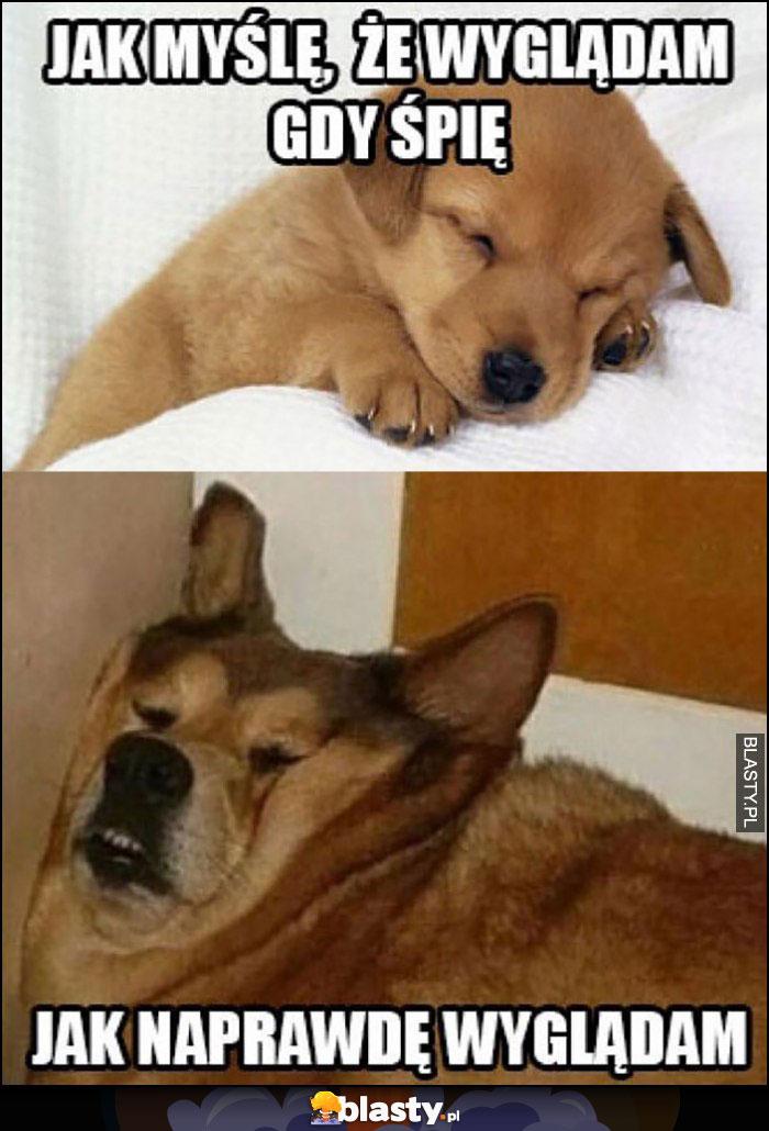 Pies psy jak myślę, że wyglądam gdy śpię vs jak naprawdę wyglądam