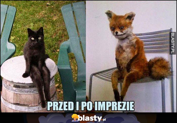 Przed i po imprezie kot lis siedzą na krześle