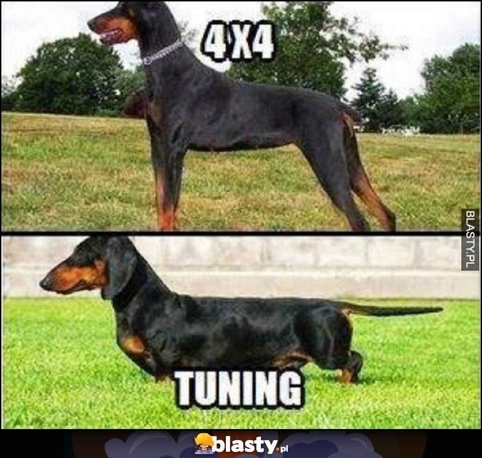 Psy 4x4 vs tuning obniżone zawieszenie