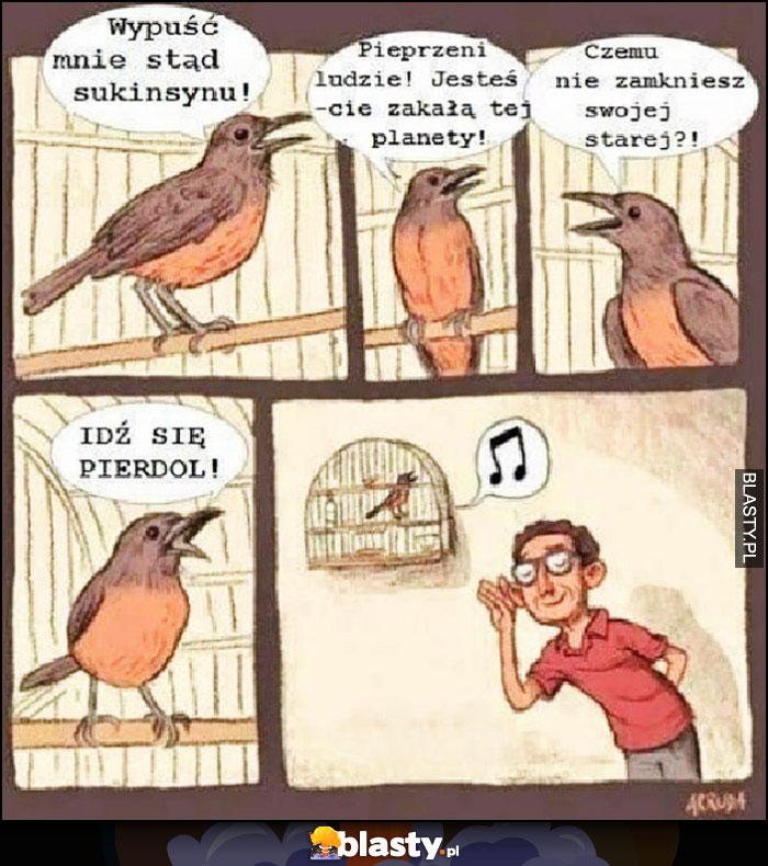 Ptak ćwierka bluzga a facet słucha go z przyjemnością