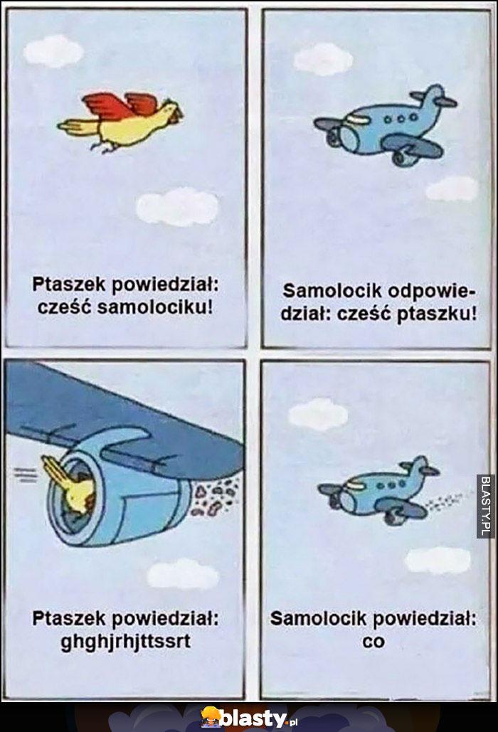 Ptaszek: cześć samolociku, cześć ptaszku, samolot zmielił ptaszka komiks