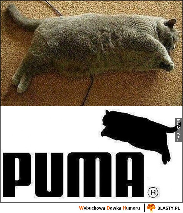 Puma gruby kot przeróbka logo