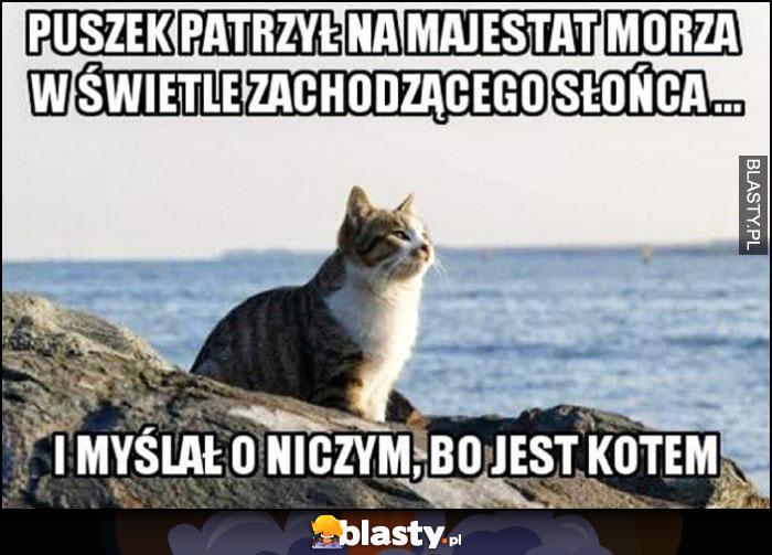 Puszek patrzył na majestat morza w świetle zachodzącego słońca i myślał o niczym, bo jest kotem