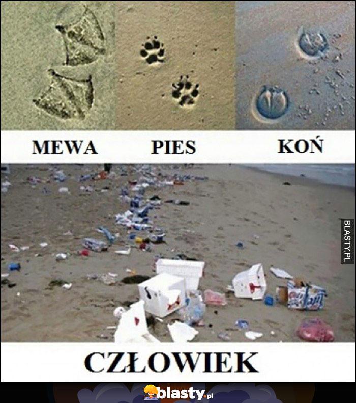 Ślady na piasku plaży mewa, pies, koń, człowiek zostawia po sobie śmieci