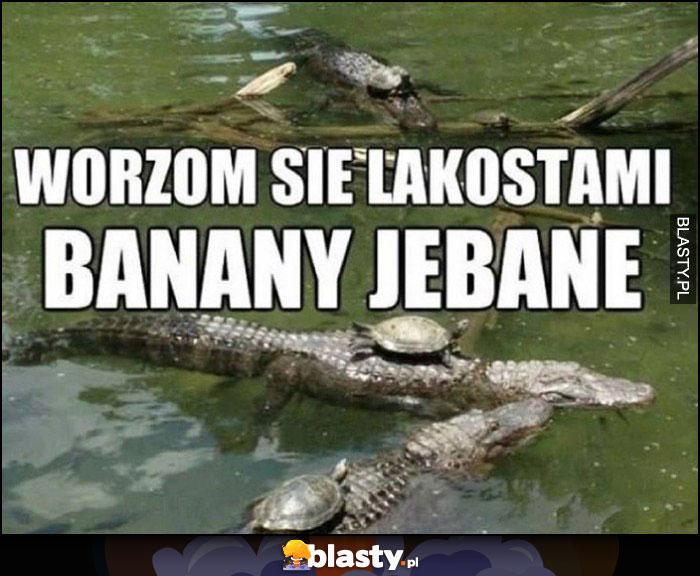 Wożą się Lacostami banany jechane, żółwie na krokodylach