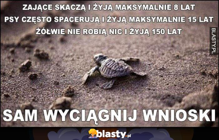Zające skaczą i żyją 8 lat, psy spacerują i żyją 15 lat, żółwie nie robią nic i żyją 150 lat, sam wyciągnij wnioski