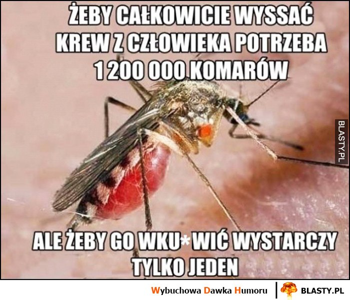 Żeby całkowicie wyssać krew z człowieka potrzeba 1,2 mln komarów, ale żeby go wkurzyć wystarczy tylko jeden