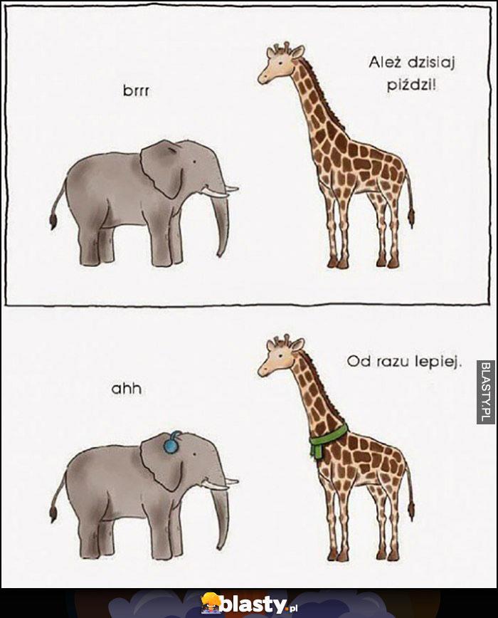 Ale dzisiaj zimno od razu lepiej słoń żyrafa szalik nauszniki