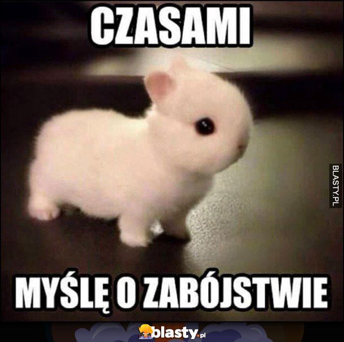 Czasami myślę o zabójstwie słodki pluszowy króliczek