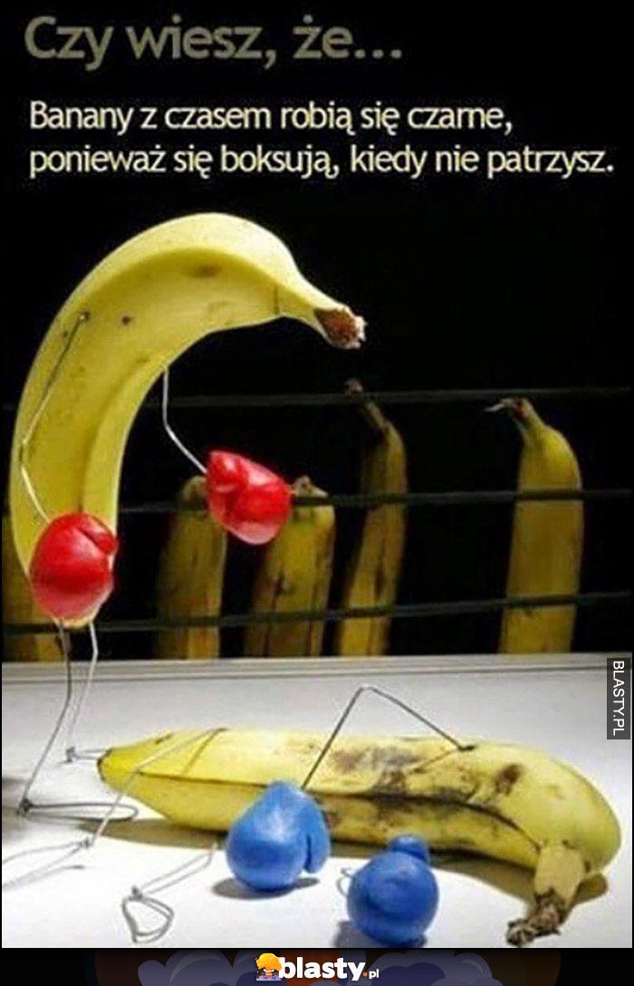 Czy wiesz, że banany czasem robią się czarne, ponieważ boksują się kiedy nie patrzysz
