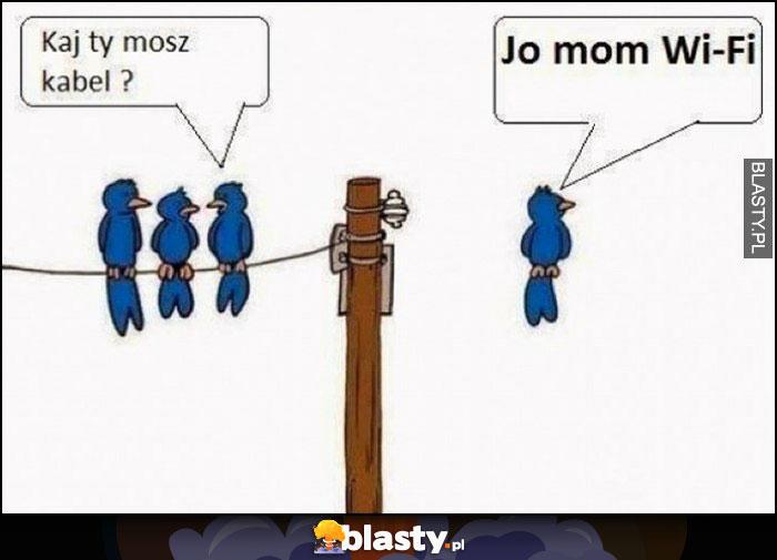 Gdzie ty masz kabel? Ja mam WiFi ptaki siedza na przewodach kablach
