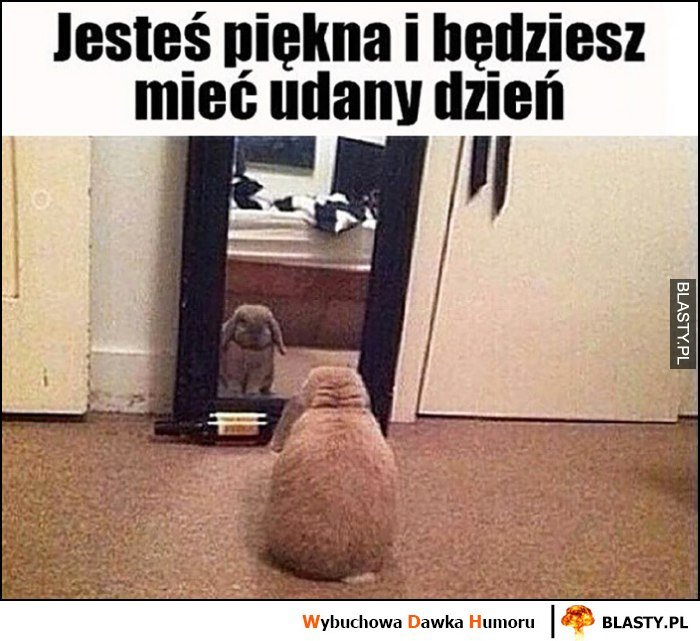 Jesteś piękna i będziesz mieć udany dzień królik zając mówi do siebie przed lustrem
