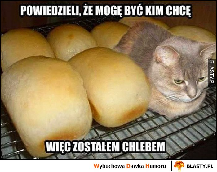 Kot powiedzieli, że mogę być kim chcę więc zostałem chlebem