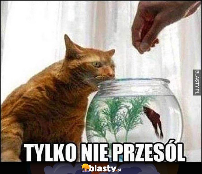 Kot rybka tylko nie przesól