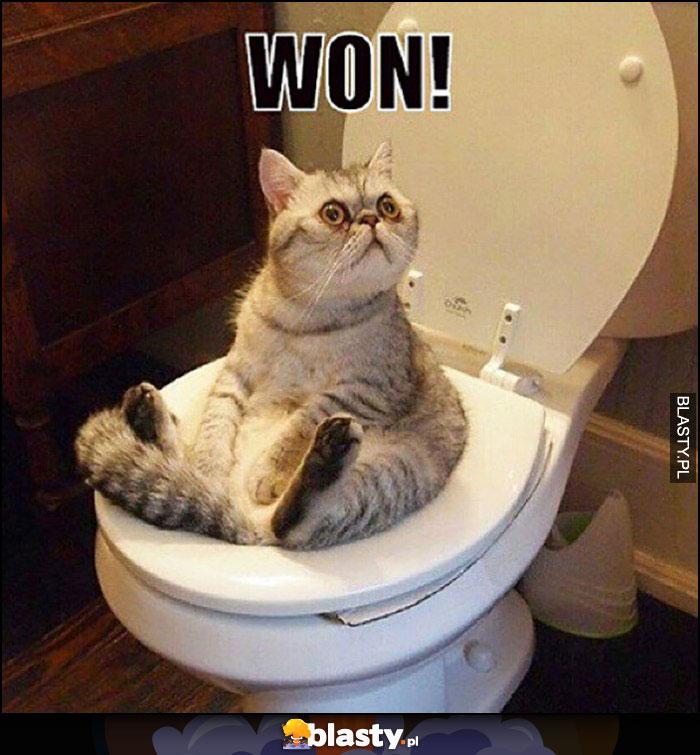 Kot siedzi na kiblu toalecie won