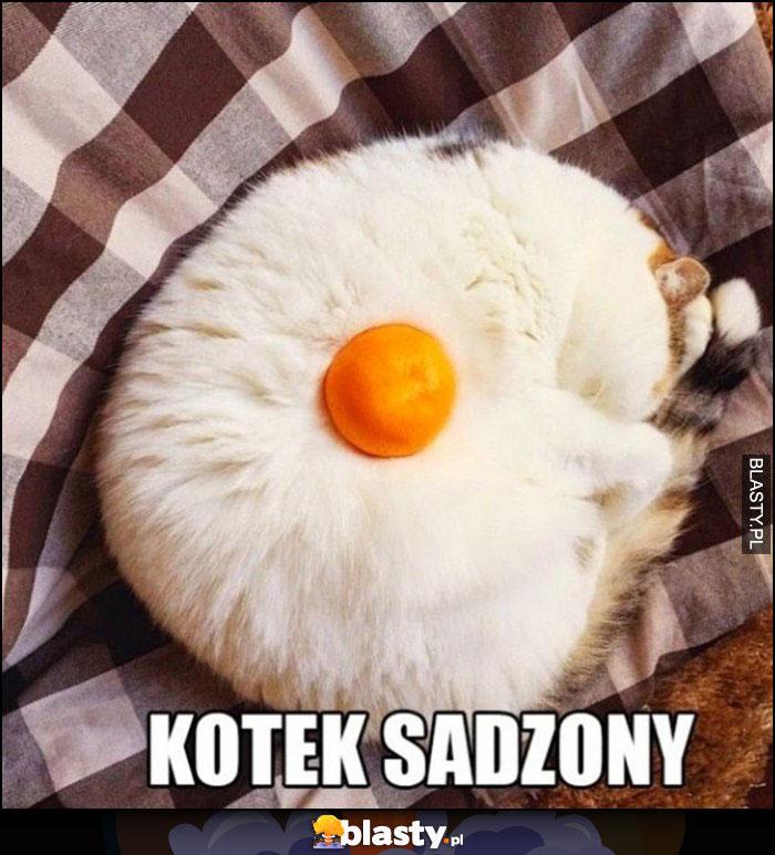 Kotek sadzony kot z żółtkiem wygląda jak jajko