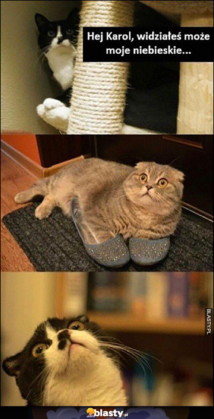 Koty hej Karol widziałeś może moje niebieskie buty kapcie?