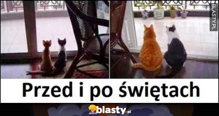 Koty przed i po świętach chude grube przejedzone