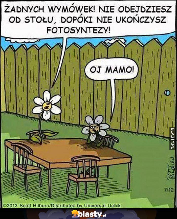 Kwiatek obiad żadnych wymówek, nie odejdziesz od stołu dopóki nie ukończysz fotosyntezy