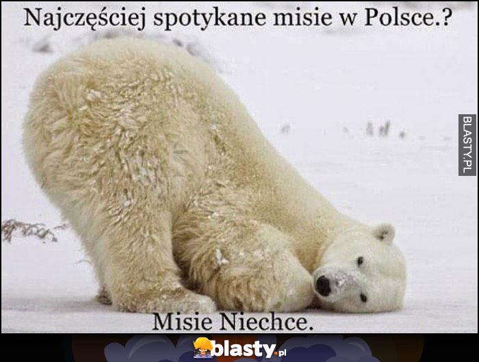 Najczęściej spotykane misie w Polsce? Misie niechce