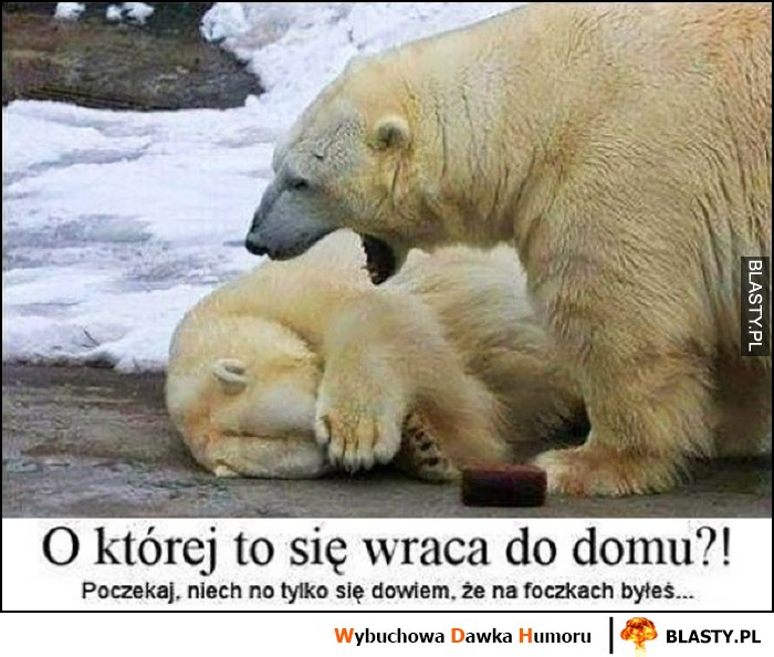 Niedźwiedź o której to się wraca do domu? Niech no tylko się dowiem, że na foczkach byłeś