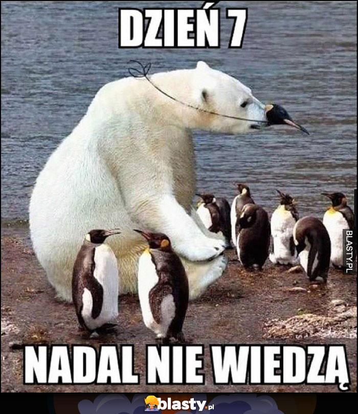 Niedźwiedź wśród pingwinów, dzień 7 nadal nie wiedzą