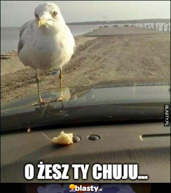 O żesz ty chamie zmartwiony ptak chleb za szyba w aucie