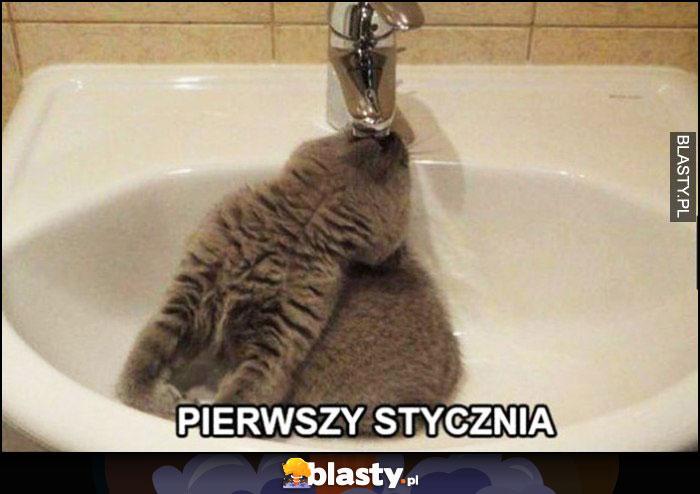 Pierwszy stycznia kot pije wodę z kranu kac szuszy go
