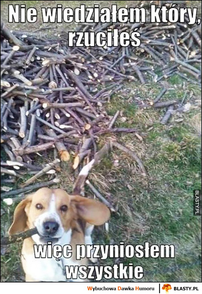Pies nie wiedziałem który rzuciłeś, więc przyniosłem wszystkie patyki