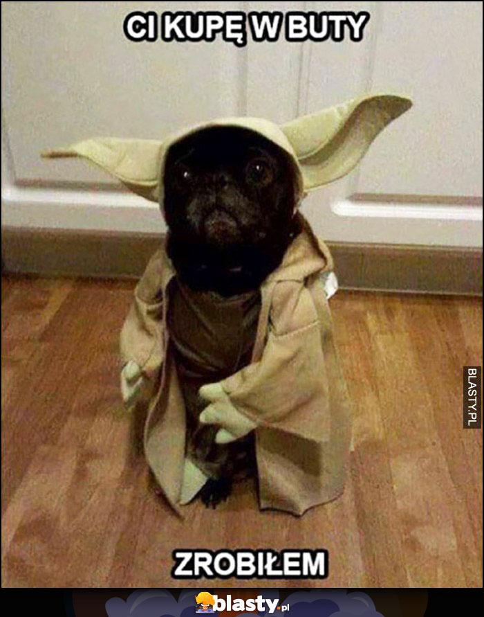 Pies Yoda Ci kupę w buty zrobiłem