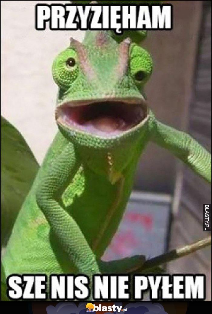 Przysięgam że nic nie piłem pijany nawalony kameleon
