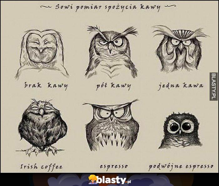 Sowi pomiar spożycia kawy - brak, pół, jedna, Irish, espresso, podwóje espresso