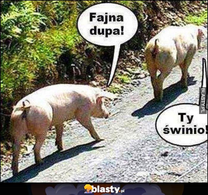 Świnie idą fajna dupa, ty świnio!