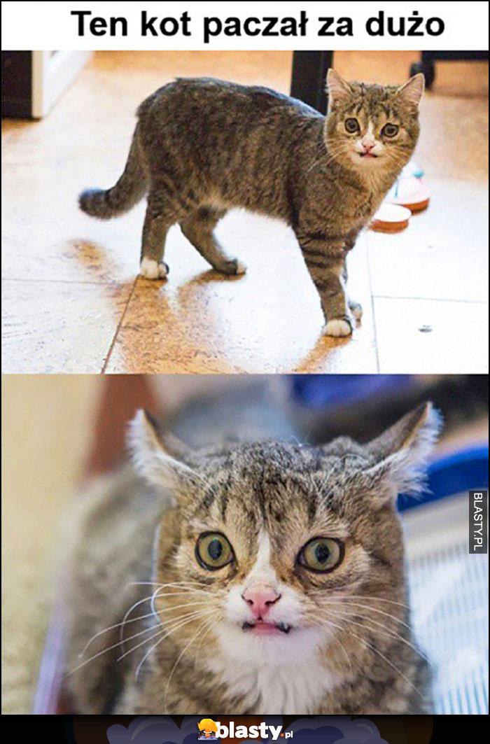 Ten kot paczał za dużo dziwna skrzywiona mina