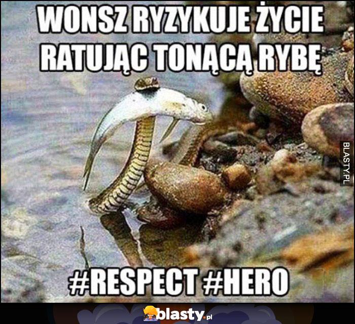 Wąż ryzykuje życie ratując tonącą rybę szacunek