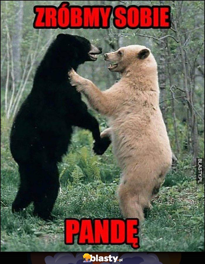 Zróbmy sobie pandę walczy czarny i biały niedźwiedź