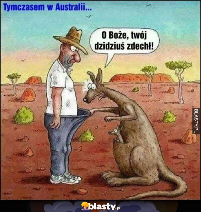 Australia kangur zagląda do worka do majtek, o matko Twoj dzidziuś zdechł