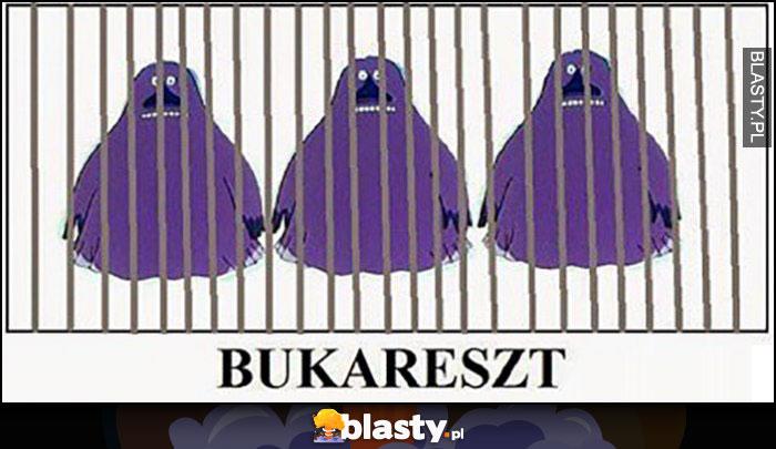 Bukareszt areszt więzienie z Bukami Buka