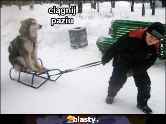 Ciągnij paziu, pies na sankach, dziecko go ciągnie