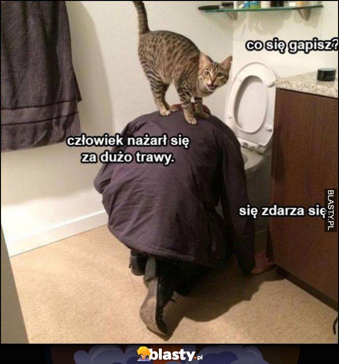 Facet rzyga, kot: co się gapisz? Człowiek nażarł się za dużo trawy, się zdarza się
