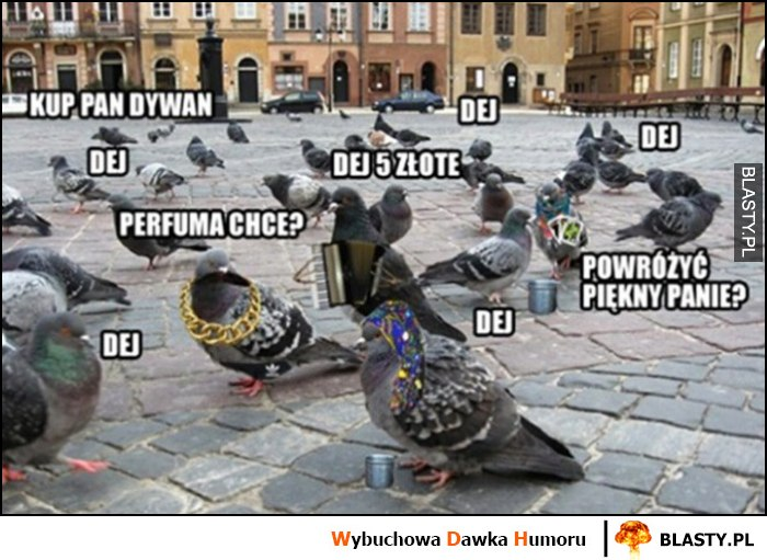 Gołębie cygańskie: kup pan dywan, powróżyć, dej, perfuma chce?