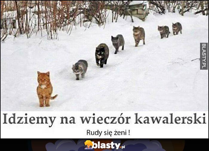Idziemy na wieczór kawalerski, rudy się żeni - rudy kot przewodzi innym kotom