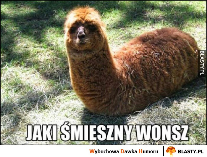 Jaki śmieszny wąż wonsz